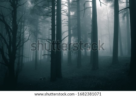 very mysterious and desolate atmosphere on a gloomy day in the dark woods with thick fog #1682381071
