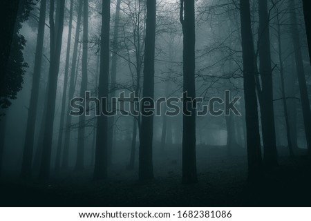 very mysterious and desolate atmosphere on a gloomy day in the dark woods with thick fog #1682381086