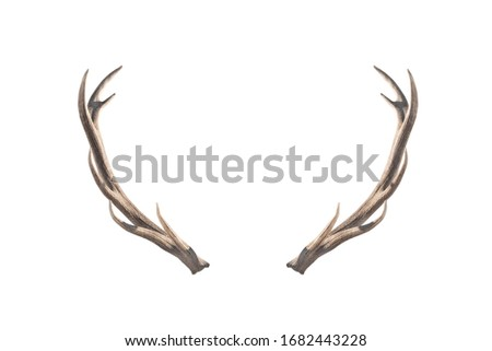 Deer horns isolated on a white background. Royalty-Free Stock Photo #1682443228