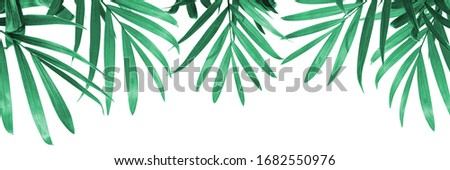 green leaves on a white background, eco design, natural green framing #1682550976