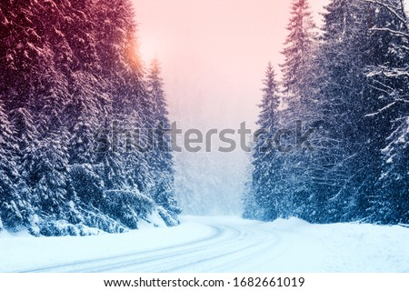 Snowy road and conifer forest on winter day. Color tone  #1682661019