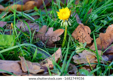 one Blossom from dandelions in spring on a meadow #1682749036