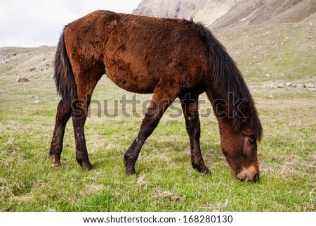 Grazing horses in the mountains. Stepantsminda, Georgia #168280130