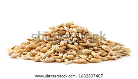 Barley grain heap close-up on a white. Isolated Royalty-Free Stock Photo #1682807407