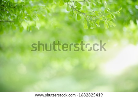 Close up of beautiful nature view green leaf on blurred greenery background under sunlight with bokeh and copy space using as background natural plants landscape, ecology wallpaper concept. Royalty-Free Stock Photo #1682825419