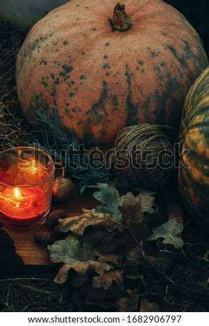 atmospheric picture. pumpkin candle, walnuts