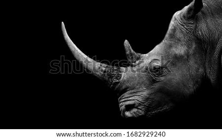 Dangerous Big Horn Rhino Face Royalty-Free Stock Photo #1682929240
