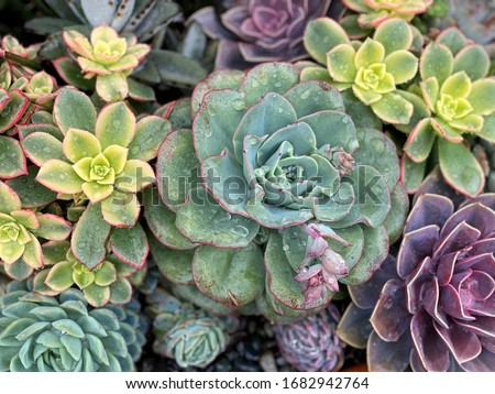 Colorful background of succulent plants Royalty-Free Stock Photo #1682942764