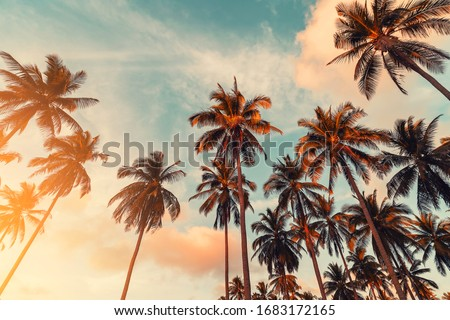 Copy space of silhouette tropical palm tree with sun light on sunset sky and cloud abstract background. Summer vacation and nature travel adventure concept. Vintage tone filter effect color style. Royalty-Free Stock Photo #1683172165