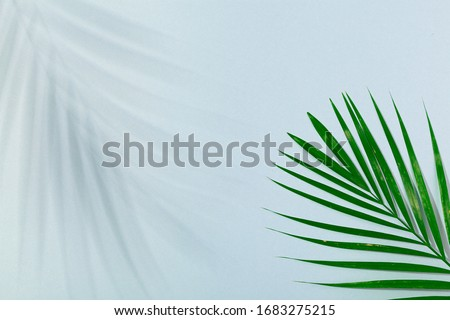 Palm leaf and palm leaf shadow on turquoise blue background. Concept of beach holiday, sea tour, warm sunny summer