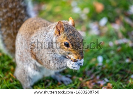 Squirrel eating nuts in the park #1683288760