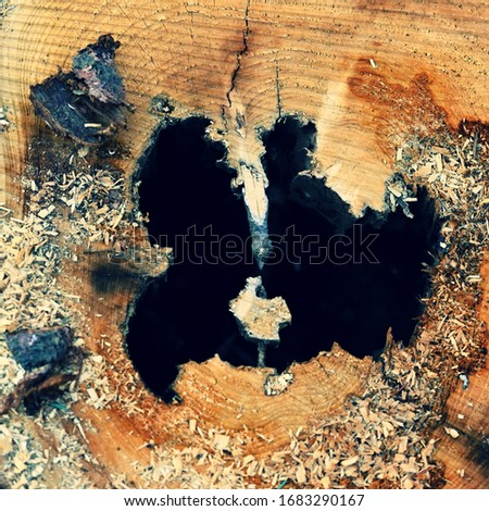 Destroyed tree trunk. Bark beetle attacked the forest. (Scolytinae, Ipinae) #1683290167