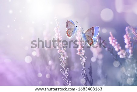 Amazing beautiful colorful natural scenery. Lavender flowers and two butterfly in rays of summer sunlight in spring outdoors on nature macro, soft focus. Atmospheric photo, gentle artistic image. #1683408163