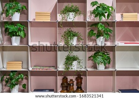 Amazing white metal shelves with many green plants in the pots and books and wooden decorations on the pink wall background in the illuminated interior. Horizontal.