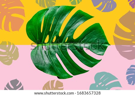 Exotic tropical summer frame with monstera leaves and place for tex. Stock vector illustration. Vector design for invitation cards, flyers. Vector monstera leaves design.