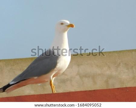 Random pics of seagull birds