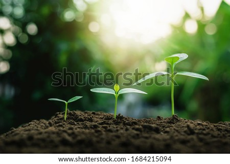 Plant growth on the soil #1684215094