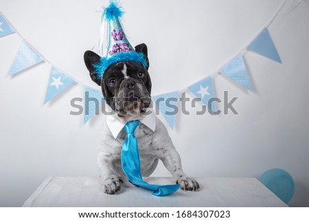 Funny portrait of cute french bulldog wearing silly birthday hat and blue tie leaning out on a table over white background. Happy birthday party concept. Isolated image.