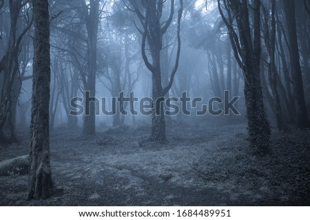 Spooky misty foggy dark forest at night