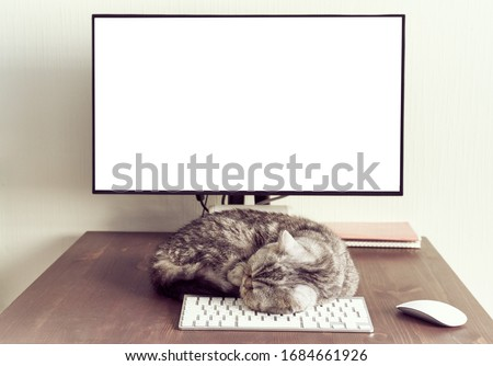 Keep calm and stay home concept. Fluffy cat sleeps on desktop next to computer. Calmness, equanimity, comfortable sweet cozy home. mock up, copy space, template,