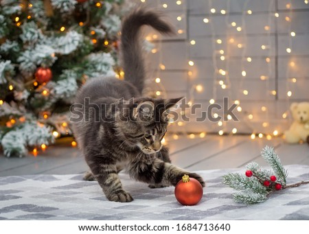Maine coon kitten plays on a Christmas background #1684713640