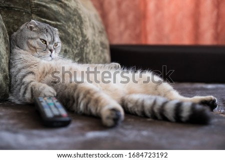 A lazy fat cat is lying asleep on the sofa with a remote control from the TV #1684723192