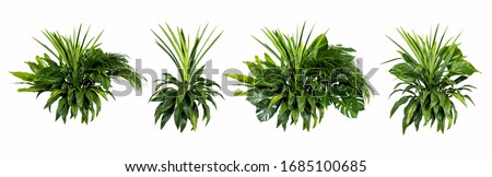 Green leaves of tropical plants bush (Monstera, palm, rubber plant, pine, bird's nest fern) floral arrangement indoors garden nature backdrop isolated on white background thailand,clipping path includ #1685100685