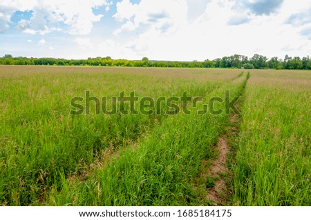 summer landscape, lawn grass in the process of ripening seeds, lawn in a lush green blanket #1685184175