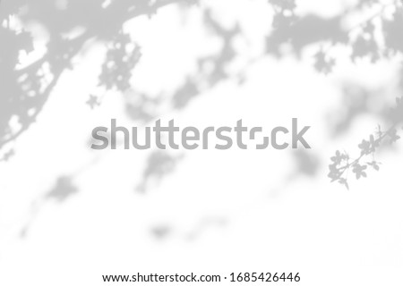 Blurred overlay effect for for natural light photo effects. Gray shadows of cherry tree blooming branches on a white wall. Abstract neutral nature concept background for design presentation.  #1685426446