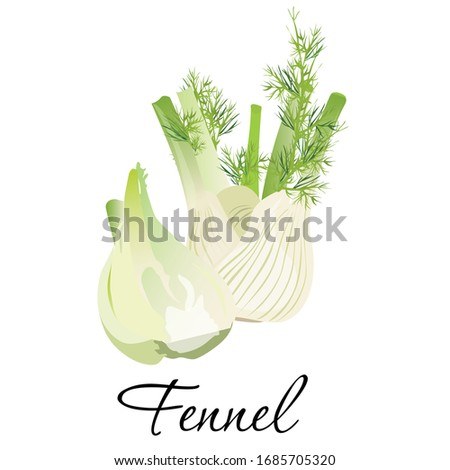 Fresh fennel icon vector illustration. Plant perennial herb with yellow flowers, feathery leaves. Isolated on white background Royalty-Free Stock Photo #1685705320