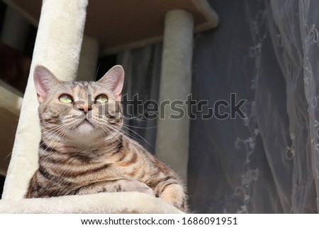 American shorthair cat relaxing in the sun.
