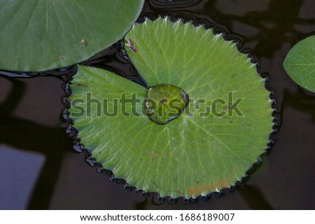Water lily in the Zagreb botanical garden in the indoor pond. Interesting abstract and nature shot with water forming different patterns. #1686189007