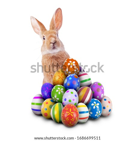 Curious, cute and funny Easter Bunny or Easter Rabbit peeking behind a pile of painted decorated or ornate Easter Eggs for Easter Egg Hunt Game isolated white background, cut out or cutout Royalty-Free Stock Photo #1686699511