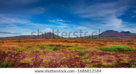 Panoramic view over beautiful colorful landscape with ancient moss and lichen, tundra flowers and meadow fields near volcanoes in Iceland