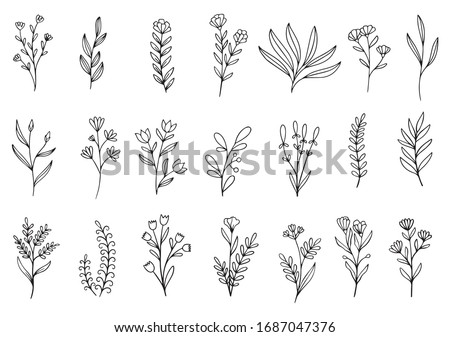 collection forest fern eucalyptus art foliage natural leaves herbs in line style. Decorative beauty elegant illustration for design hand drawn flower Royalty-Free Stock Photo #1687047376