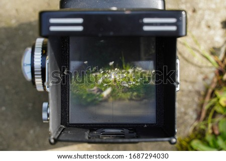 landscape through the viewfinder of the vintage TLR (Twin lens reflex) camera.