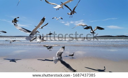 Seagull flying at seaside in a warm sunny day in Morocco Royalty-Free Stock Photo #1687437385