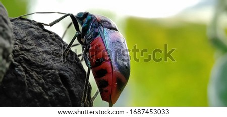 A good-skinned insect perched on jatropha. Black, red-shelled insects are solid with green on the head. Shiny shelled insects. Macro photography. Royalty-Free Stock Photo #1687453033