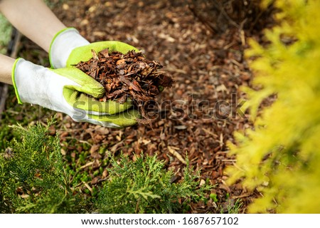 mulching garden conifer bed with pine tree bark mulch #1687657102