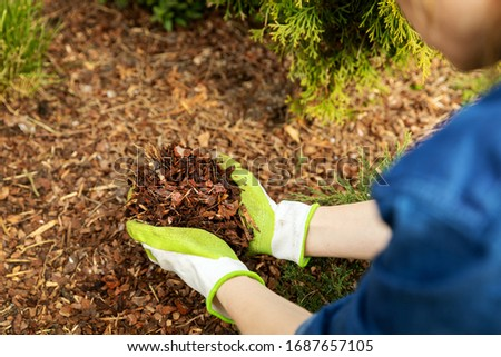 mulching garden conifer bed with pine tree bark mulch #1687657105