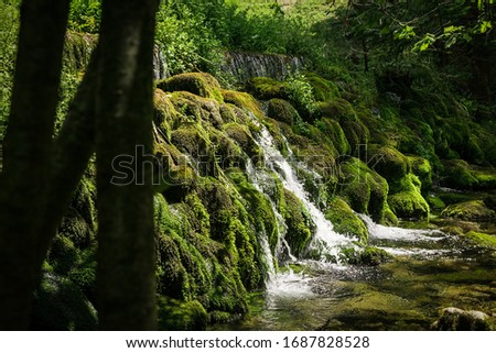 The source of the river in deep forest