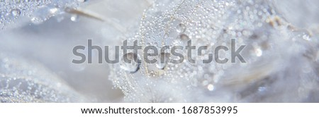 Beautiful dew drops on a dandelion seed macro. Beautiful soft blue background. Water drops on a parachutes dandelion. Copy space. soft focus on water droplets. circular shape, abstract background. Royalty-Free Stock Photo #1687853995