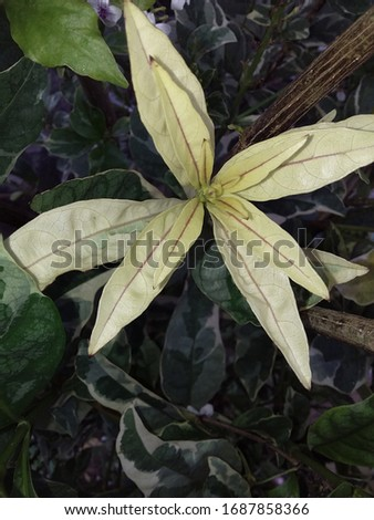 a beautiful plant with yellow leaves #1687858366