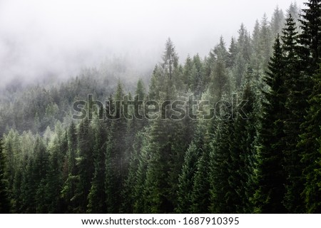 Fark fir forest with fog Royalty-Free Stock Photo #1687910395