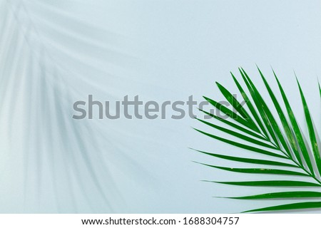 Palm leaf and palm leaf shadow on turquoise blue background. Concept of beach holiday, sea tour, warm sunny summer #1688304757