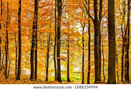 Autumn forest trees scene view. Forest trees in autumn. Autumn forest trees background. Autumn forest scene #1688334994