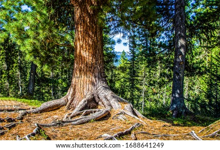 Forest tree trunk scene view. Tree trunk in forest. Forest tree trunk #1688641249