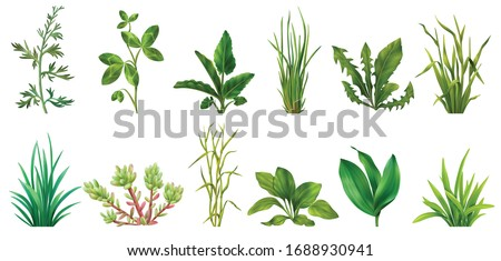 Realistic grasses herbs succulents cereals green plants set with clover dandelion chives plantain isolated  vector illustration  #1688930941