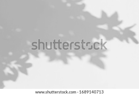 Abstract shadow of leaves on a white wall, overlay effect for photo, mock up, posters, stationary, wall art, design presentation #1689140713