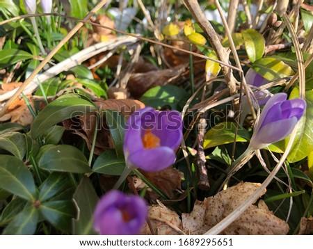 Beautiful Spring Flower Closeup Pic